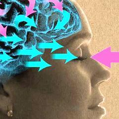 Le cerveau prédictif : avancée récente la plus intéressante en neurosciences